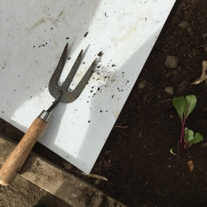 A gardening fork, be careful of the points!